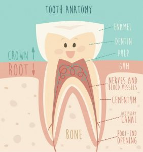 Single Tooth Parts Explained